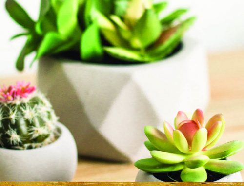 Prickly Perfection: Getting Stuck on the Succulent Trend